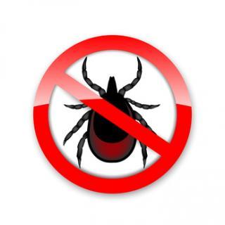 Allergie : Débarrassez-vous des acariens